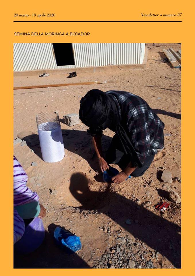 """Sahrawi: newsletter n. 37 """"Cibo e Lavoro: autoprodurre con dignità"""""""